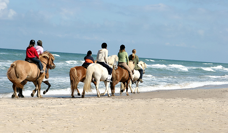 Horse Riding in Cartagena