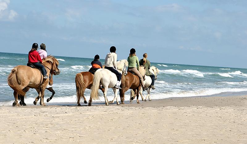 Horse Riding in Cartagena