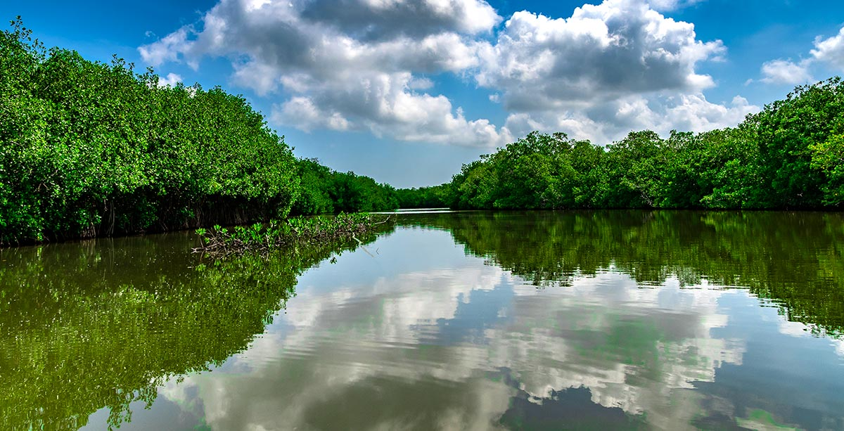 Mangroves near Cartagena